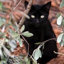 Black cat sitting behind tree branch