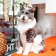 White and gray long haired cat sitting in window