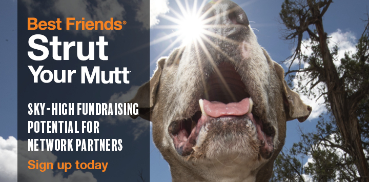 Sign up for Strut Your Mutt today