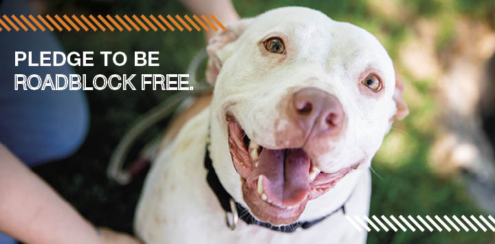 White pit bull smiling at camera with roadblock text to the left