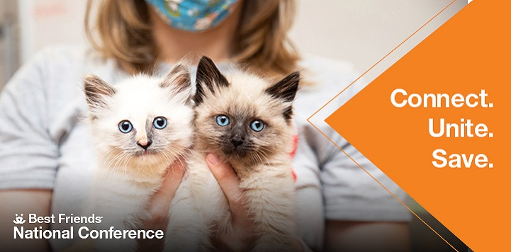 Two kittens being held by person wearing a mask to the left of conference graphic