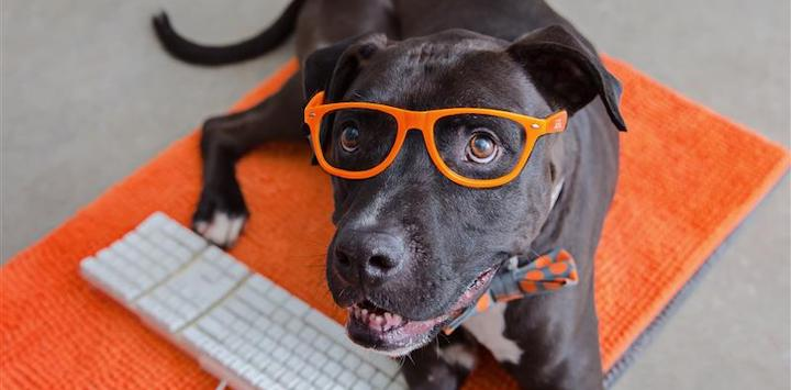 a black dog with orange glasses laying on an orange rug with a keyboard