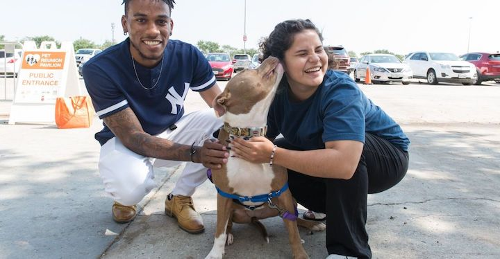 a male and female in a parking lot for a super adoption with a brown and white mixed breed dog