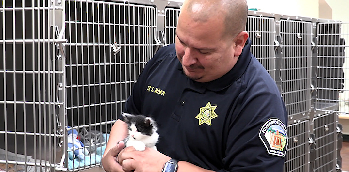 An animal control offer holds a black and white kitten in front of kennels