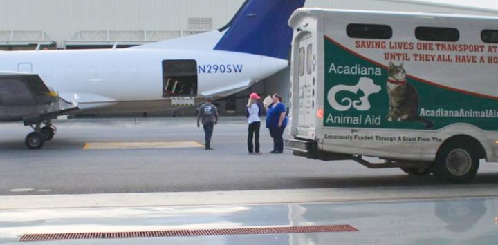 Plane and Acadiana Animal Aid transport van