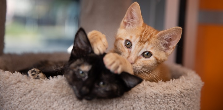 Orange kitten lying next to black kitten with paw on black kitten's head