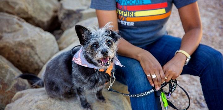 Dark gray dog wearing bandana sitting next to person in t-shirt on rock