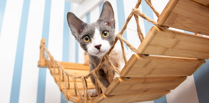 White and gray kitty on cat bridge hanging on wall