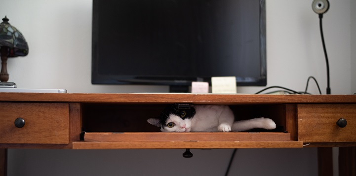 Black and white cat lying in desk compartment under computer