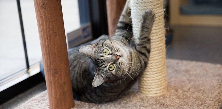 Tabby cat laying by scratching post