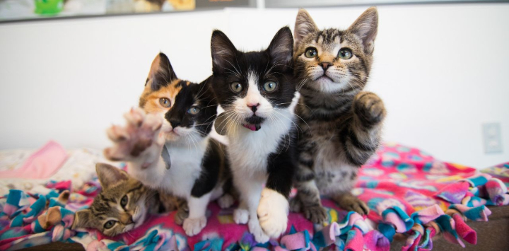 Four kittens in a pile, reaching toward the camera