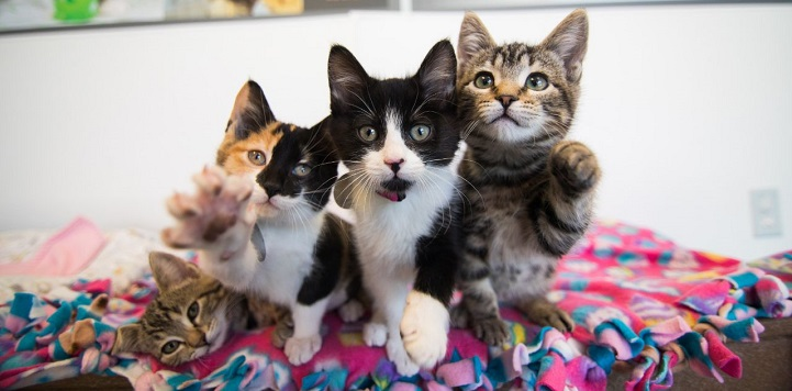 One kitten lying down to the left of three kittens with their paws up