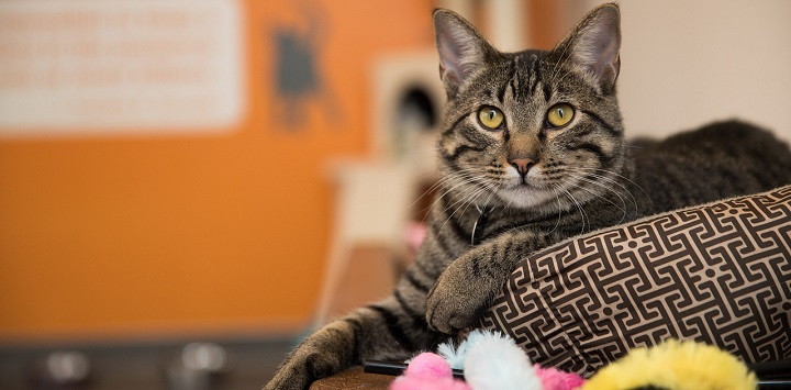 Tabby cat lying on cat bed with front paw out with orange wall in the background