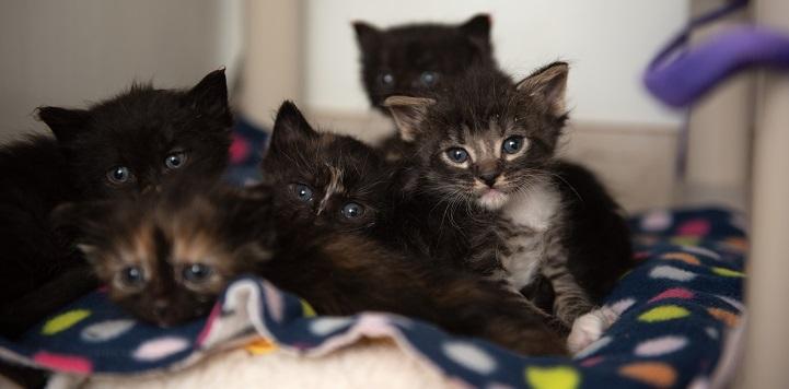 Five kittens lying together on blanket