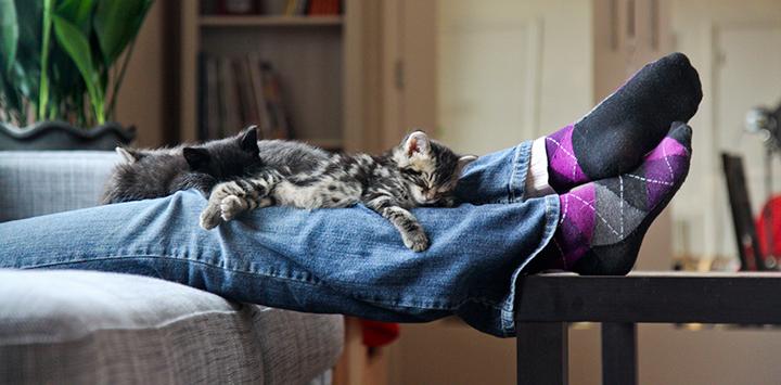 Kittens lying on person's legs