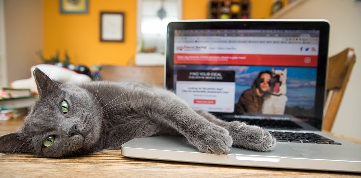 Gray cat lying on table with front paw resting on silver laptop