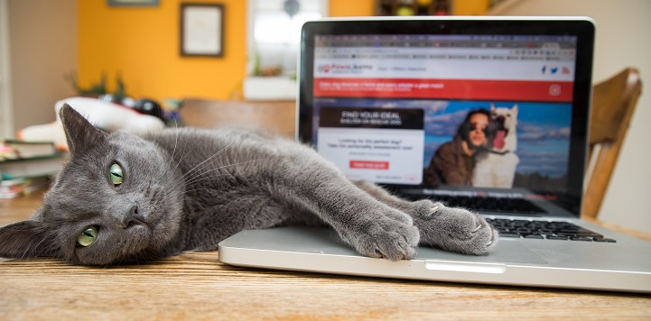Gray cat lying on its side on top of table with paws on keyboard of silver laptop