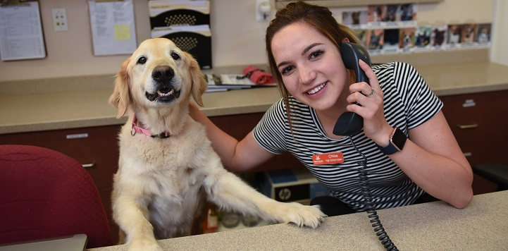 Tan dog standing with front paws on desk next to person in black and white shirt answering phone