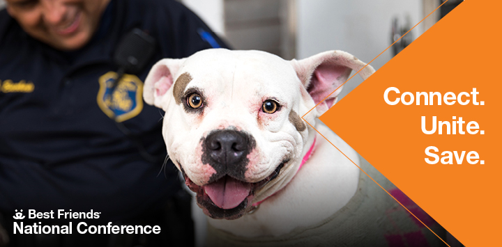 White pit bull type dog with mouth open looking at camera with conference text to the right