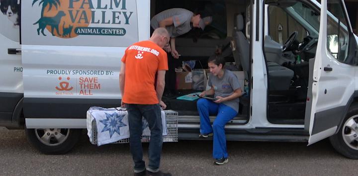 Person wearing orange shirt loading animals into transport van