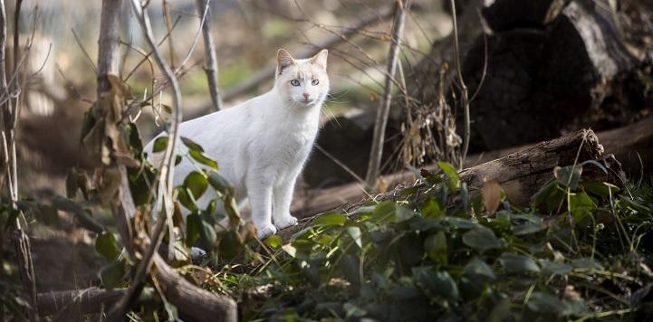 White community cat in woods near down tree