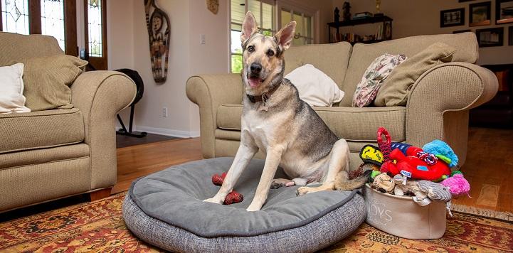 German shepherd mix dog sitting on round dog bed