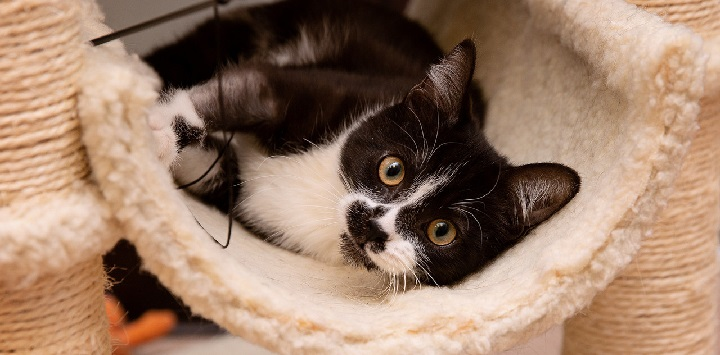 Black and white cat lying in a white carpeted perch