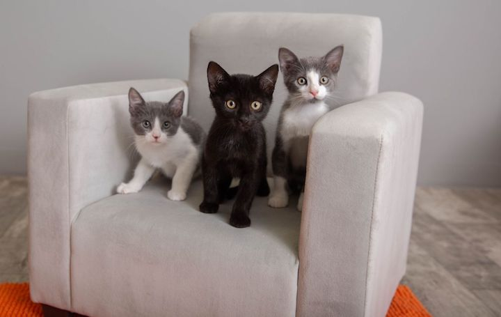 One black and two grey and white kittens perched upon a modern grey microfiber chair with an orange rug beneath it.