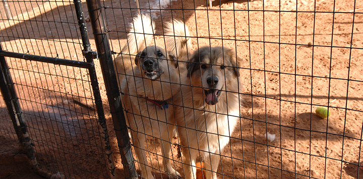Fencing Options for Your Escape Artist