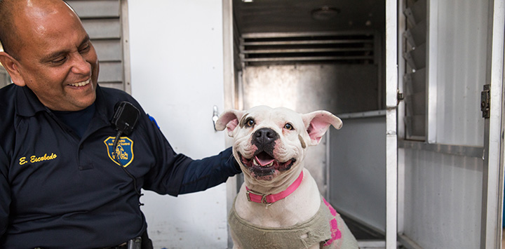 Animal control officer petting a smiling pit-bull type dog