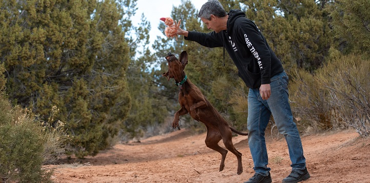 Brown hound dog jumping at toy held by man in a black Best Friends sweatshirt