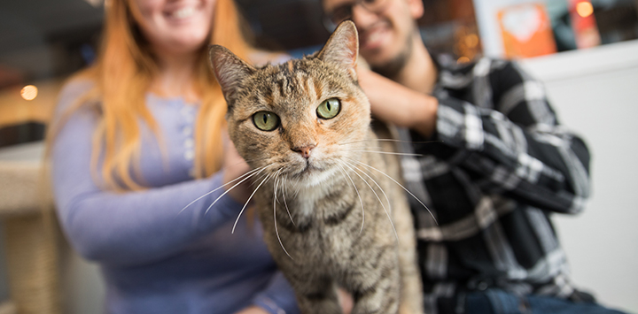 Torbie cat looking at the camera with a man and woman behind her