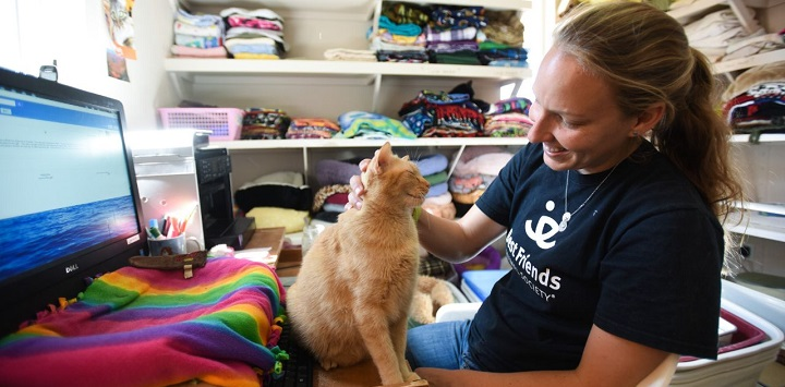 Orange cat sitting on lap of woman in black shirt at desk