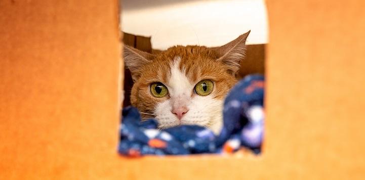 Orange cat on blue blanket lying in an orange box