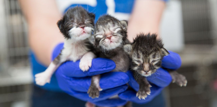 Kittens being held in hands with gloves at a nursery