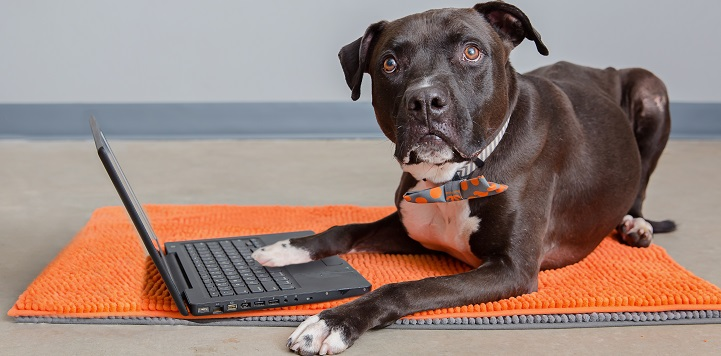Black dog with right paw on black lap top keyboard while lying on an orange rug