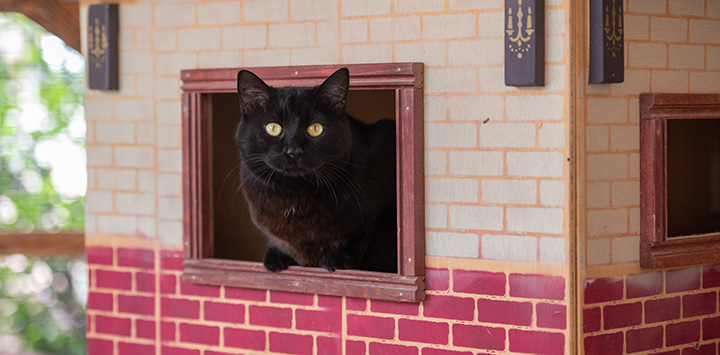 Black cat in cardboard enclosure with printing to look like a brick house