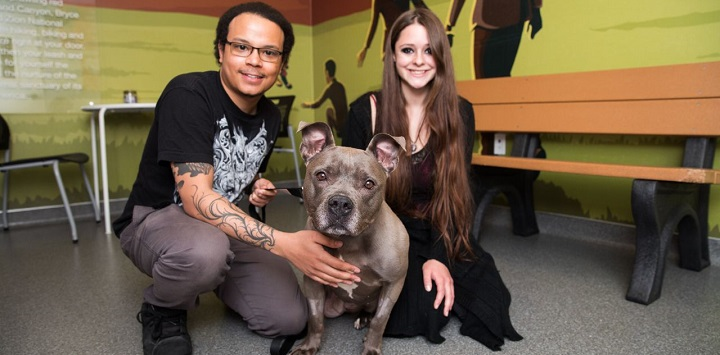 Man and woman squatting with gray pit bull dog with tan bench to the right