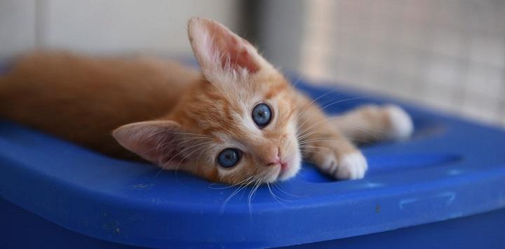 Orange kitten lying on a blue plastic tub
