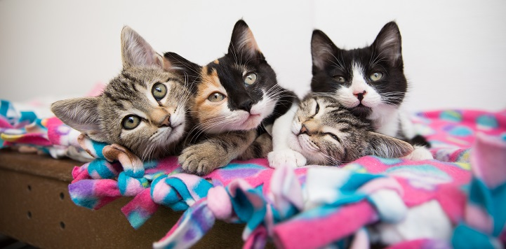 Four kittens snuggling together on pink, white, and blue blanket