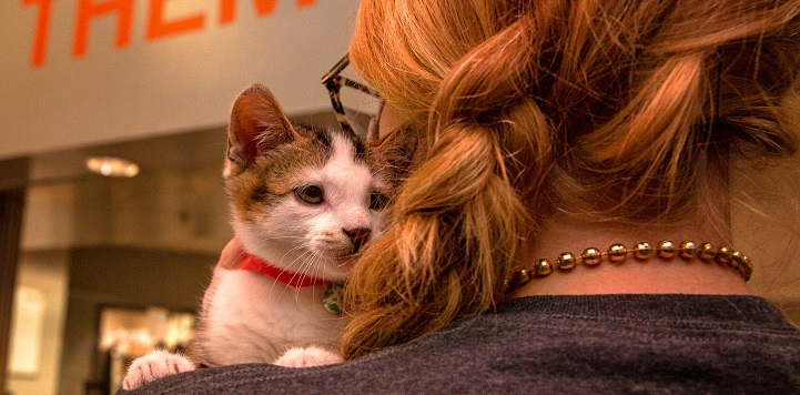 Kitten looking over the shoulder of woman with red braided hair