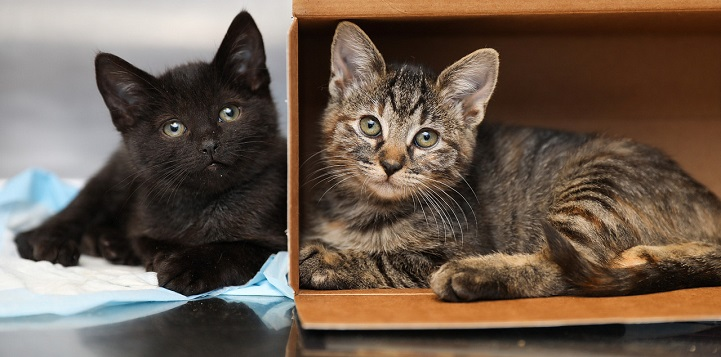 Black kitten lying next to box with tabby kitten lying inside of it