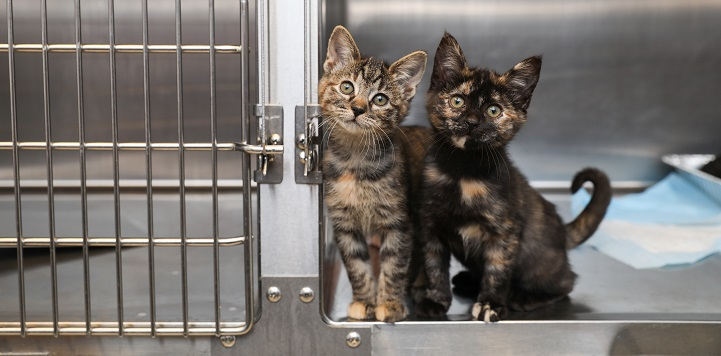Two kittens sitting in open doorway of cage