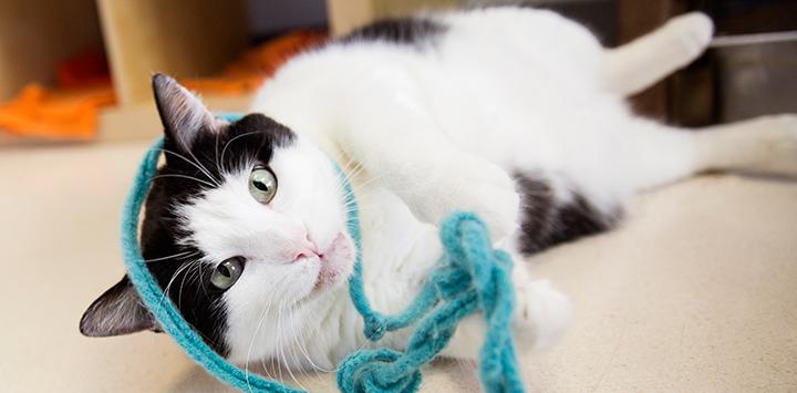 Insurance for Animal Welfare Organizations
