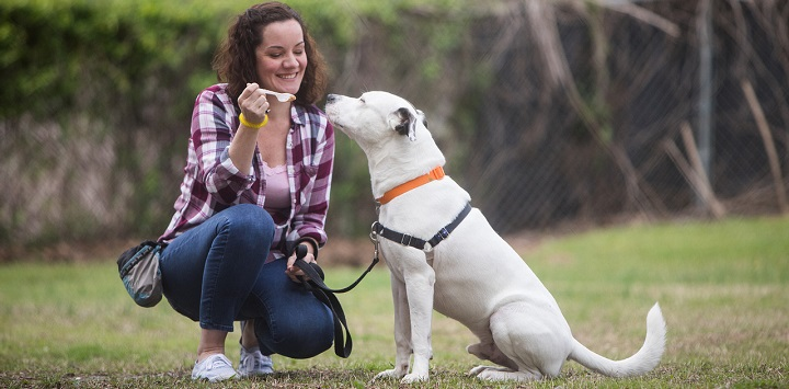 Woman in a checkered shirt and jeans kneeling and feeding a white pit bull type dog peanut butter on a spoon