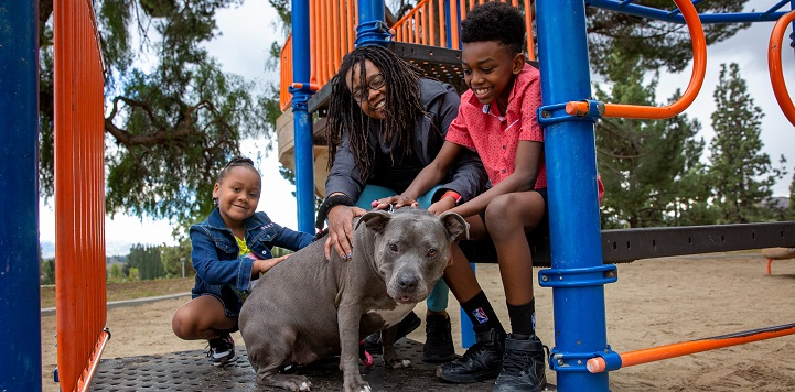 Woman, a boy, and a girl with a gray pit bull type dog on playground equipment