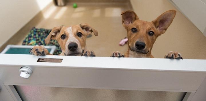 Two puppies peeking over door