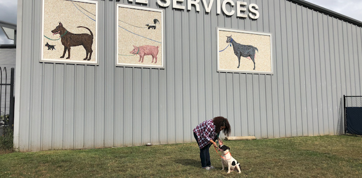 Woman with dark hair bending down to pet black and white dog in front of gray building