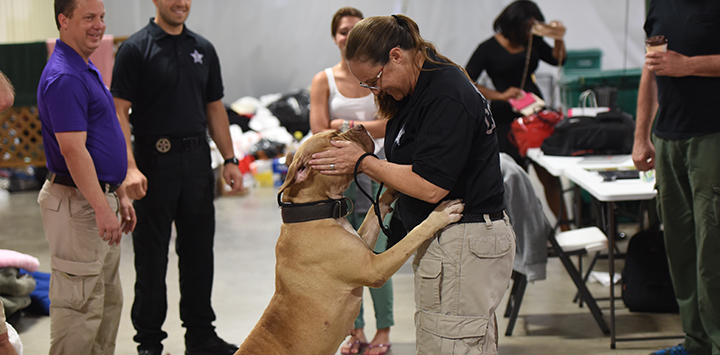 Animal control officer reaching down to give some love to a pit bull terrier type dog