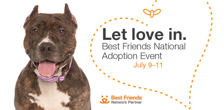 Pit bull type dog with mouth open to the left of adoption event text